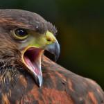 25 تصویر فوق العاده زیبا و دیدنی از دنیای حیات وحش